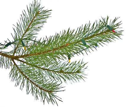 Christmas lights on pine branch isolated on white photo