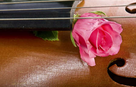 Rose on cello photo