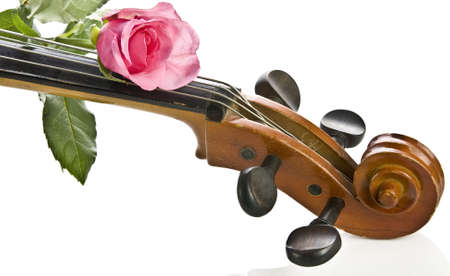 stringed: Rose on cello Stock Photo