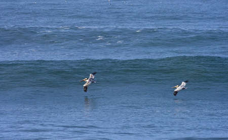 early morning california wave with birds photo