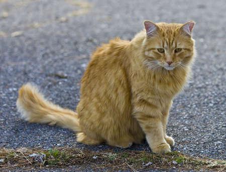 Orange cat looking away outside in fall  Imagens