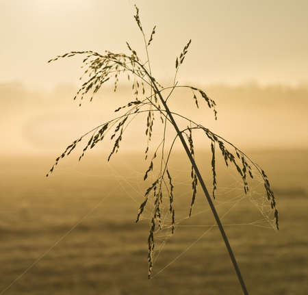 grass verge: Weeds with dew in early morning