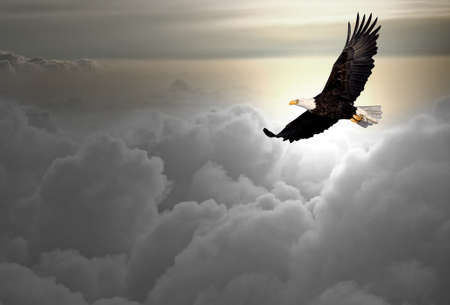 Bald eagle flying above the clouds  Stock Photo