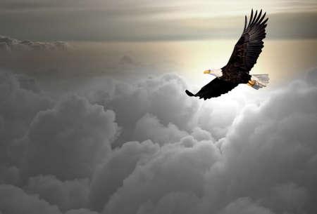 aigle: Pygargue à tête blanche en vol au-dessus des nuages Banque d'images