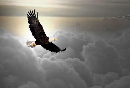calvo: Calvo águila volando sobre las nubes Foto de archivo