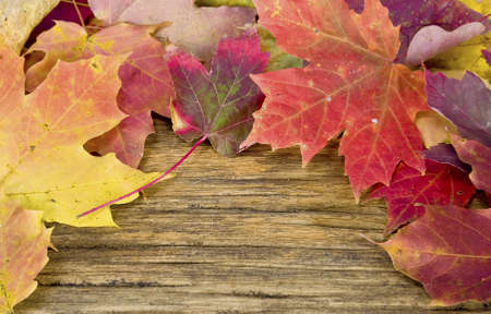 autumn grunge: autumn leaves on the background of a old wood floor