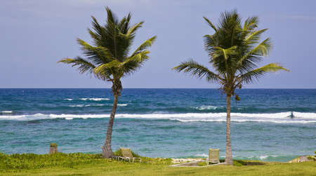 Two palm trees on the beach Stock Photo - 15018959
