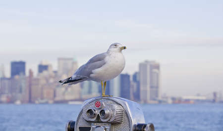 sea gull on binoculars in foreground, lower manhattan in background photo