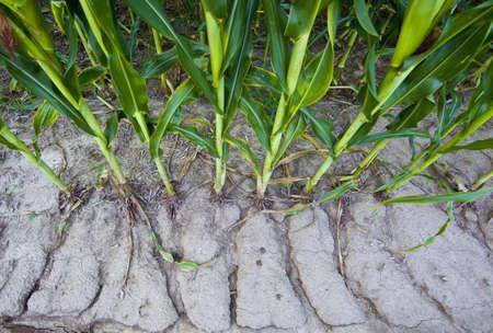 storm runoff in corn field Stock Photo - 15757176