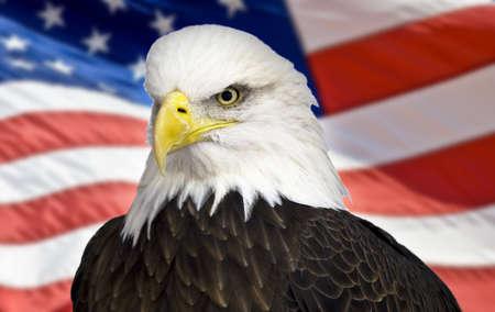 Weißkopfseeadler mit der amerikanischen Flagge out of focus