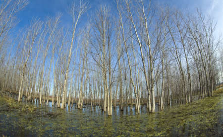 trees in swamp photo