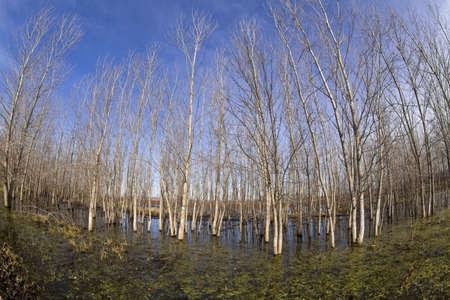 swamp: trees in swamp