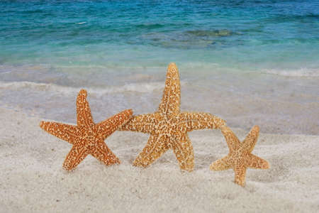 Star fish and sea Stock Photo - 16006457