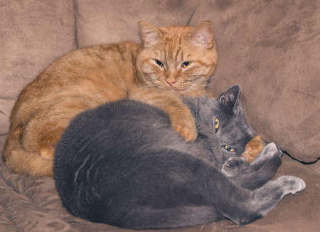 siesta: Two cat pals on a couch Stock Photo