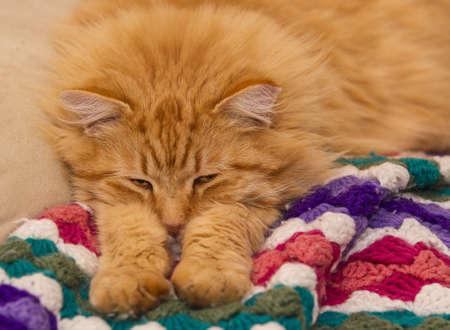orange tabby cat curled up sleeping Stock Photo - 17954930