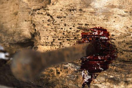 sacrificio: clavo oxidado en madera con gotas de sangre