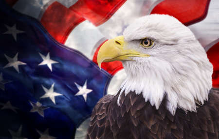 aguilas: �guila calva con la bandera americana fuera de foco y grunge mira