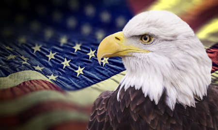 Bald eagle with grungy looking american flag out of focus