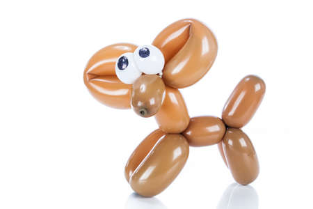 Balloon dog Chihuahua isolated on white photo