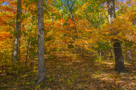 Fall colors of autumn maple trees background photo