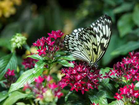 Butterfly on a plant photo