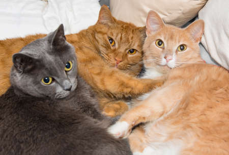 families together: Cat best friends Stock Photo