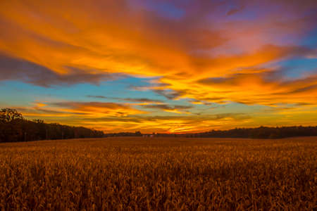Corn field at sunrise with multi colors in the sky photo