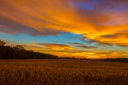Corn field at sunrise with multi colors in the sky Stock Photo - 36621217