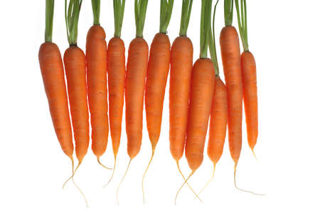carrots in line, white background