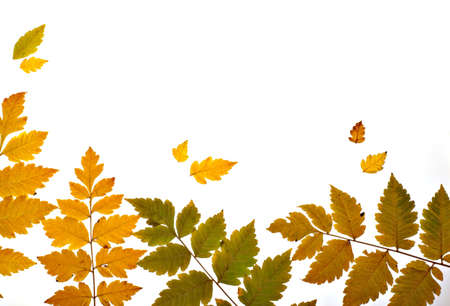 autumn leaves backlitted  diagonal Stock Photo
