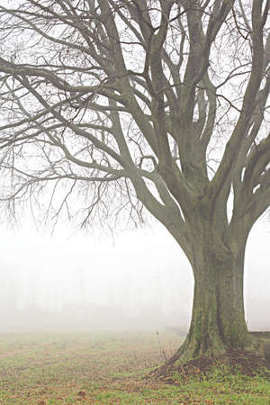 wather: a close up of a tree with foggy wather, country landscape, vertical composition