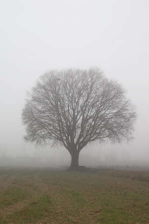 a tree in the fog, vertical composition