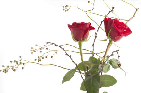 two red roses composition isolated over white Stock Photo