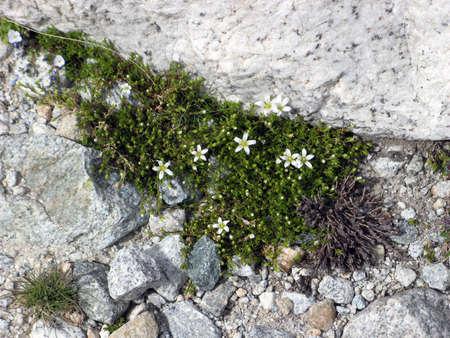 Rocks Stock Photo