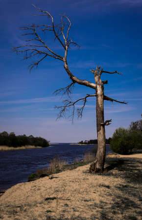 Old tree on the river bank  Stock Photo