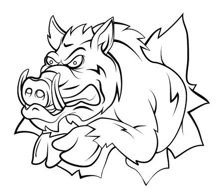ilustration: wild boar ilustration