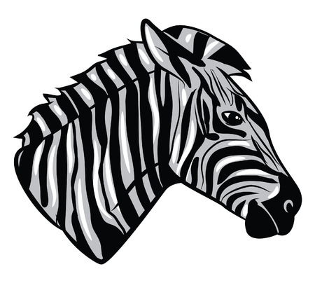 t�te de z�bre: Zebra Head Illustration