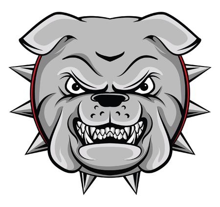 pit bull: Bull Dog
