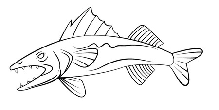 WallEye Fish Vector