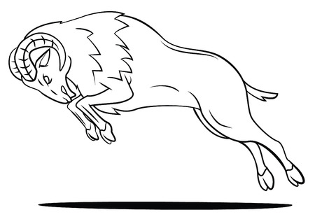 Ram Sheep Illustration