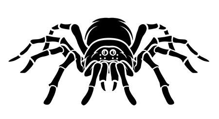 latrodectus: Spider