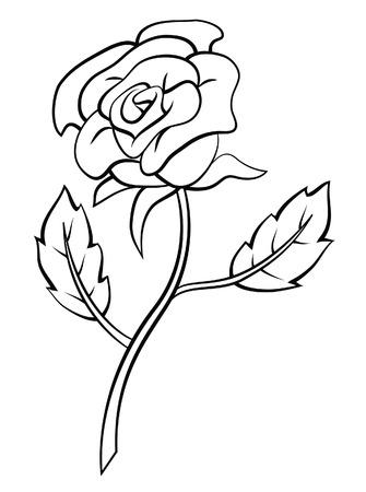 rose with stem: Rose Flower Illustration