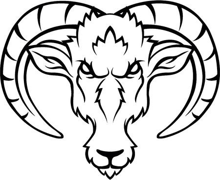ibex ram: Ibex head