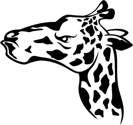 Girafe head