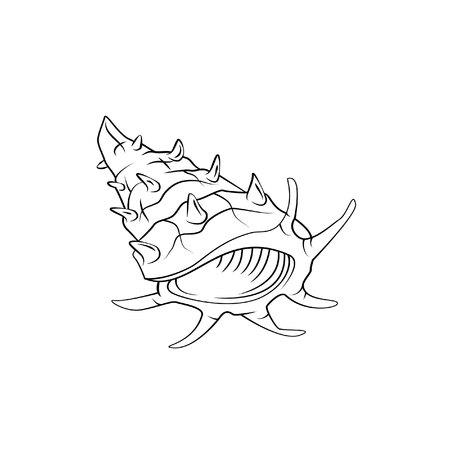 conchas: sea shells vector illustration