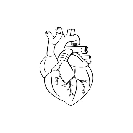 vena: heart symbol illustration
