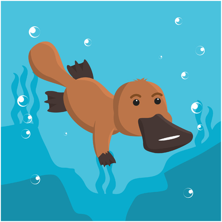 platypus swimming vector illustration design