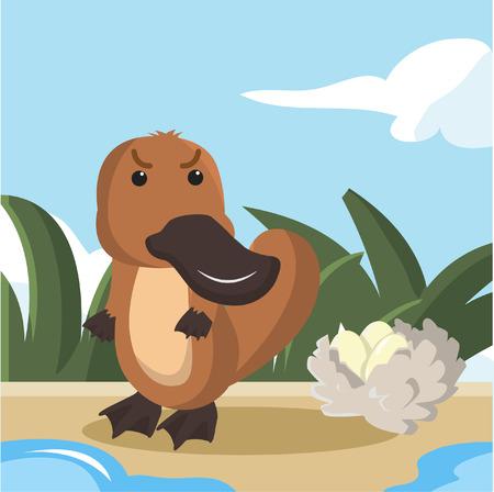platypus: platypus guaring his eggs