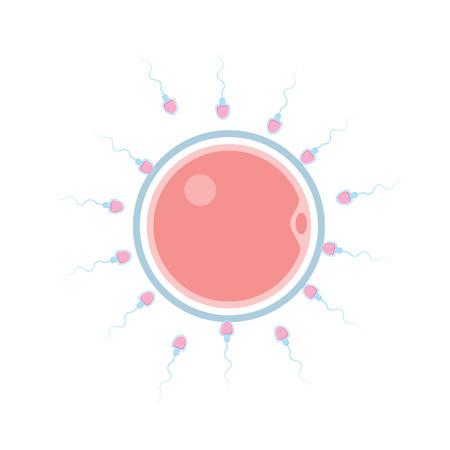 männliche Sperma weibliche Eizelle befruchten