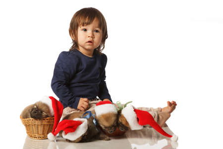 18 month old: Little 18 month old girl with Four Pomeranian Spitz two months old puppies in Santa hats lying in wicker. Studio shoot isolated.